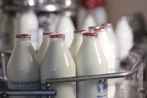 Rowlands Milk Bottles on Coveyor